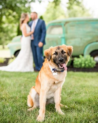 When your humans tie the knot 💍🐾#weddingphotography #weddingphotographer #weddingphoto #weddingphotographyideas #puppylove #puppyoftheday #photo #photoshoot #photography #photographer #photoshop #photooftheday #bride #groom #photogram #photographyloverOur very own @cod317  got one of the best puppy photos ever!